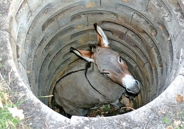 Donkey Stuck In A Well