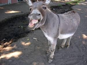 Donkey Gets His Revenge