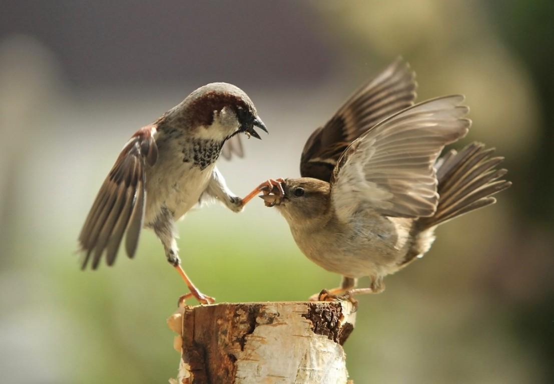 Sparrow - Beak