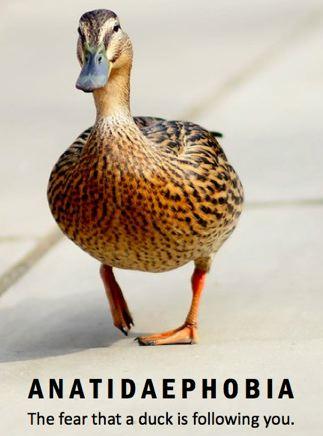 Mimeticisomorphism, Ducks, Fear Of Ducks
